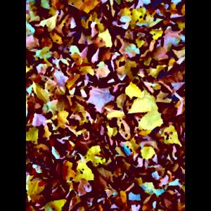 Herbst Laub Herbstlaub Blätter Natur Wald Stimmung