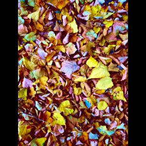 Blätter Blatt Herbst Herbstlaub Natur Wald Foto