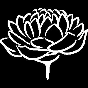 Lotusblume 2