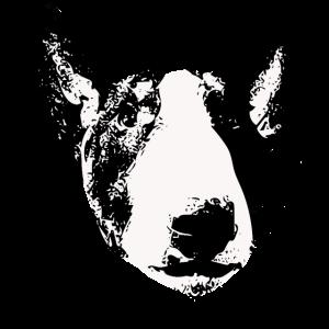 Englischer Bullterrier