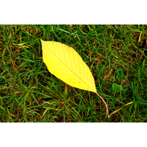 Laub Blatt Herbstmotiv