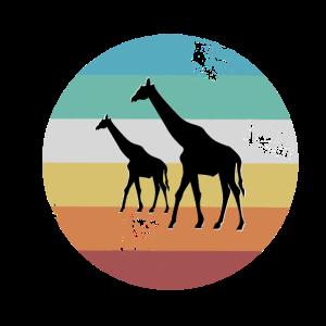 Giraffen Giraffe