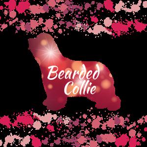 Bearded Collie hund gassi hunde welpe geschenk wuw