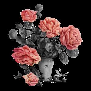 Blumen Rosen