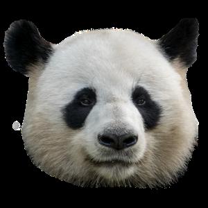 Pandabär Geschenkidee