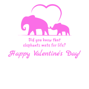 Liebe meines Lebens - Valentinsgeschenk Elefanten