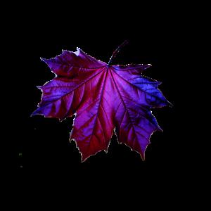 blatt herbst jahreszeiten lila cool geschenk geil