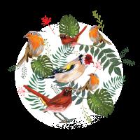 Vogel Evolution - Geschenkidee für Naturliebhaber