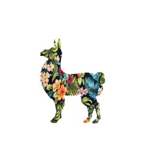Easily distracted by llamas
