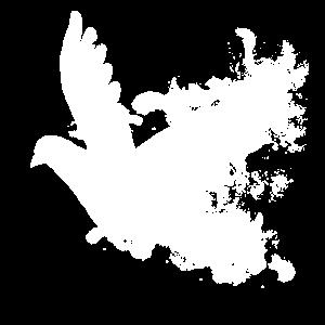 Weiße Taube Hochzeit