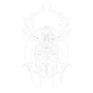 Insekt Kaefer Beetle Natur Wald Krabbeltier