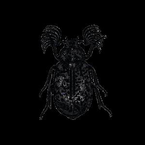 Kaefer Insekt Beetle Wald Natur Gothik Ornament