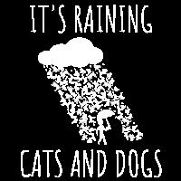 Sprichwort Regen Wetter Cats Dogs Wolke Geschenk