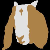 Ziegenkopf Burenziege