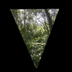 Doppelbelichtung dreieck Wald Geschenk Bäume Natur