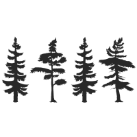 Baum Bäume Nadelbaum Wald Natur Geschenk Outdoor
