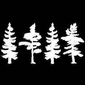 Baum Outdoor Bäume Nadelbaum Wald Natur Geschenk