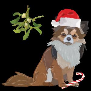 Chihuahua Hund Weihnachtsmütze Zuckerstange Mistel