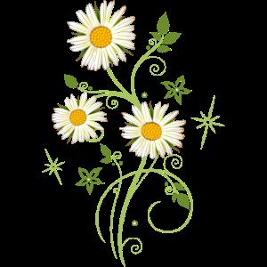 Blumenranke Ranke Margeriten Wildblumen Sommer