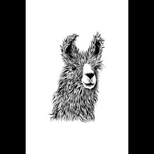 Alpaka Zeichnung