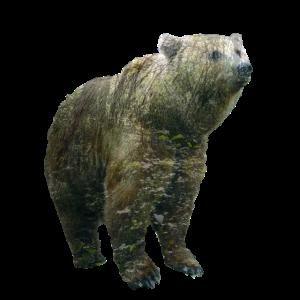 Doppelbelichtung Grizzly Bär Wald Natur Geschenk