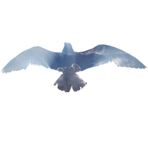 Vogel Doppelbelichtung Wolken Geschenk
