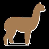 Alpaka von der Seite