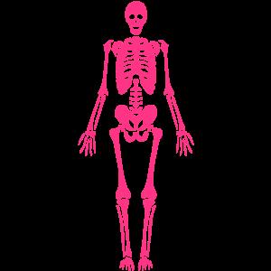menschliches Skelett Schädel, Skelett, Skelett