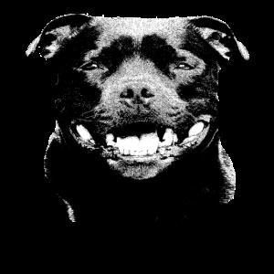 Staffordshire,Terrier,Kampfhund,Staffbull,