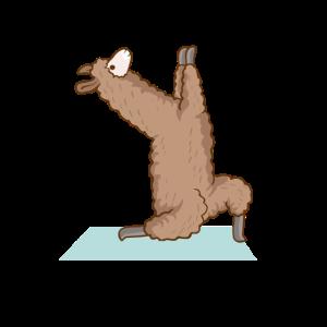 Alpaka Lama Yoga Sport Lustig Turnen Gymnastik