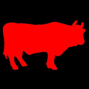 Red Wagu Beef Bull