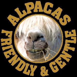 Alpakas freundlich und sanft