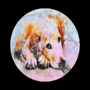 Suesser Hund schaut traurig
