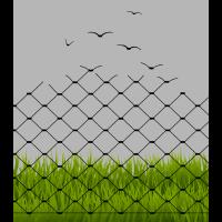 Illusion - Maschendrahtzaun und Vögel - Zaun