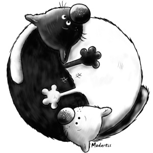 Black and White - Yin Yang - Katzen