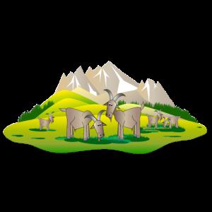 Bergziegen auf der Almwiese