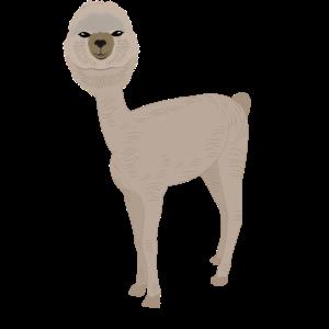 Kahl geschorenes Langhals Alpaka