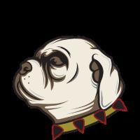 englische Bulldogge - niedlich - Hund
