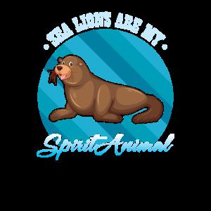 Robbe Seehund Seelöwe Seebär