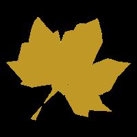 Herbst Blatt Ahorn