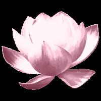Lotusblume retro - altrosa