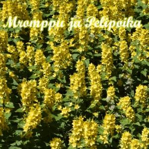 Keltaisia kukkia
