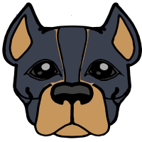 Hund - Pittbull - Kopf