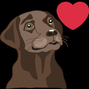 Labrador mit kleinem Herz