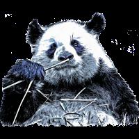 Panda Pandabär Bär Bambus