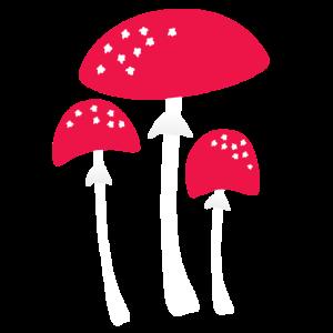Pilzsammler Pilze Sammeln Wandern Waldbewohner