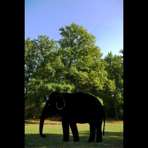 Skurriles Landschaftsposter mit einem Elefanten