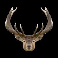 Polygon Deer