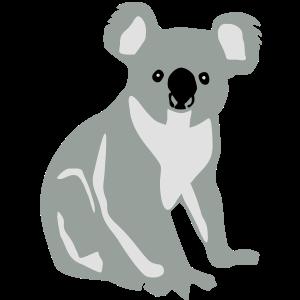 Koala, Koalabär