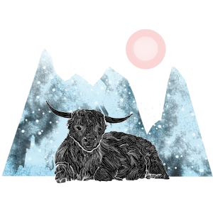 Highlander Cow Winter